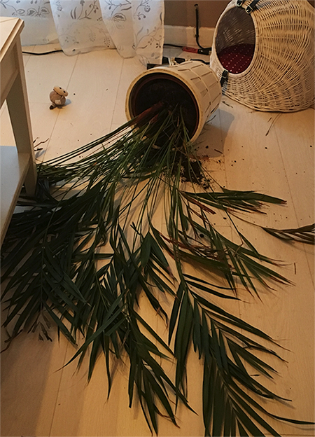Cats with plants dont mix