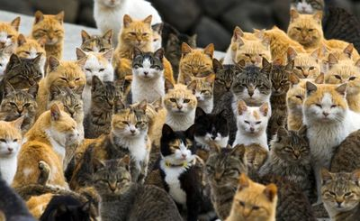 Thousands of cats