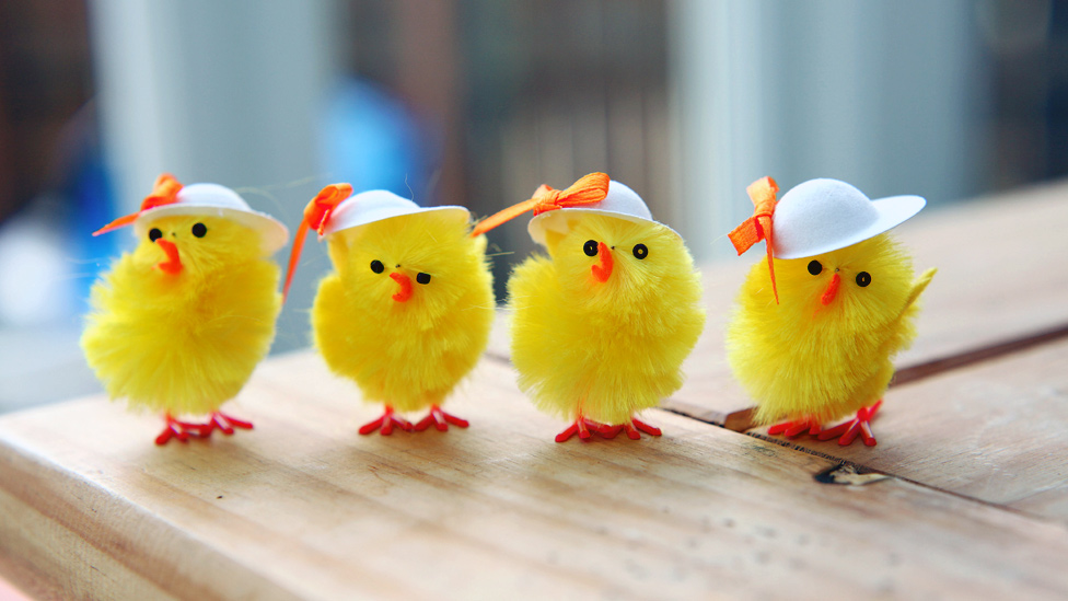 _52400460_easter_chicks.jpg