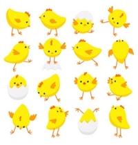 name-chicks.jpg