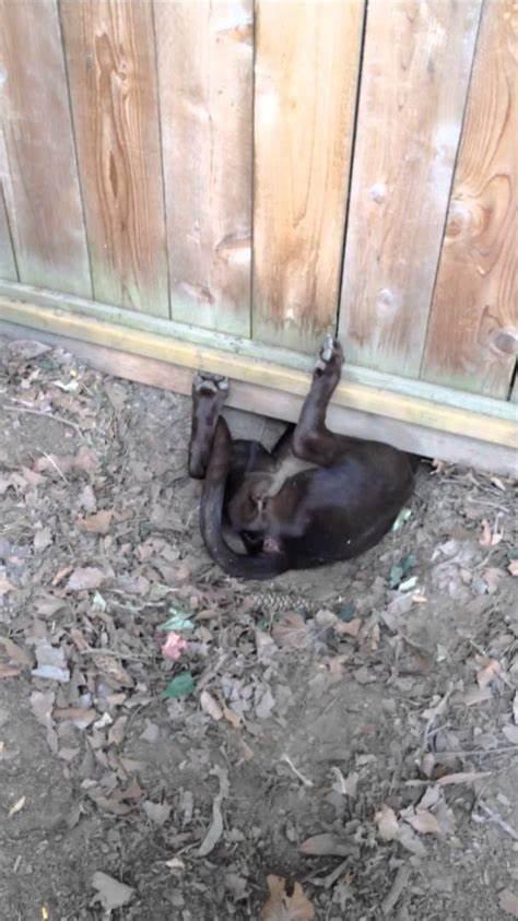 under fence dog.jpg