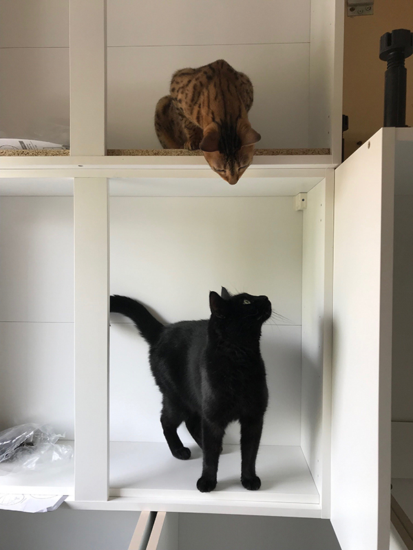 Cats exploring kitchen cupboards