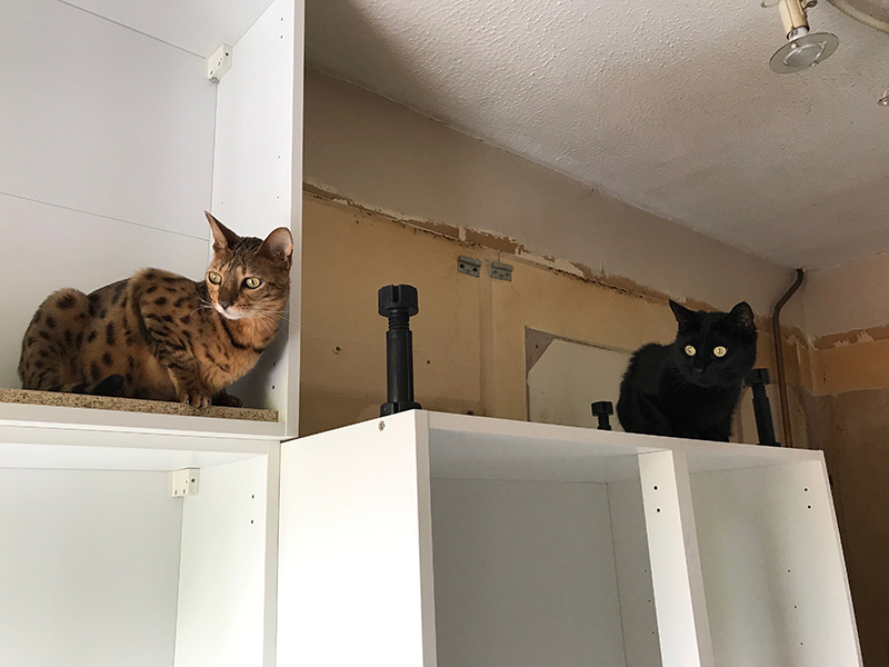Cats exploring kitchen cupboards, another angle