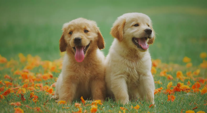 Picture of two puppies