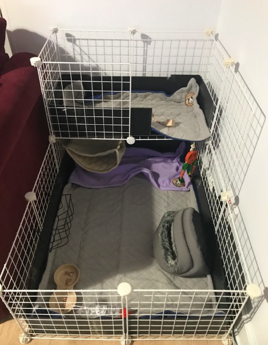 Picture of enclosure for guinea pigs