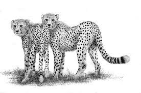 cheetah-drawing.jpg