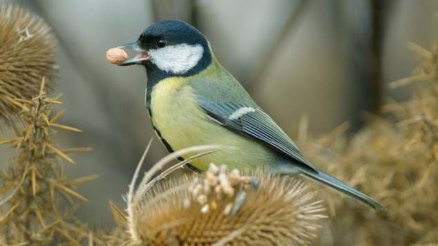 birdA.jpg