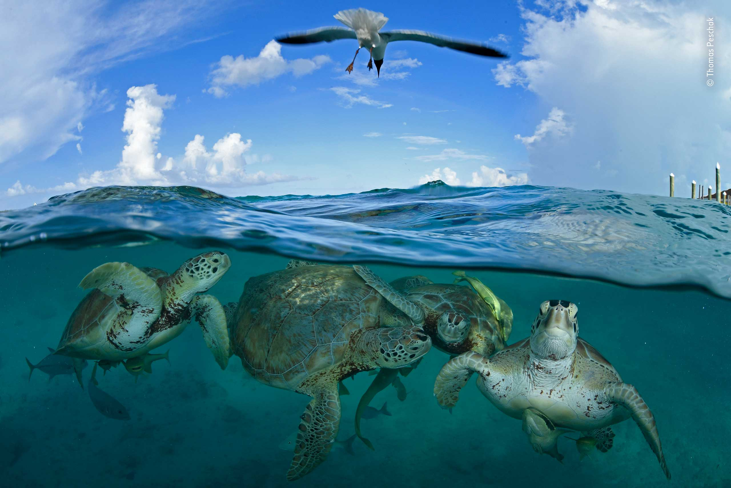 turtle-time-machine.jpg