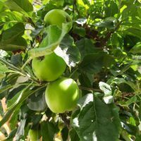 TallTrees_10-1628836132865.jpeg