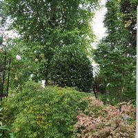 TallTrees_18-1628836132611.jpeg