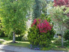TallTrees_29-1628836132672.jpeg