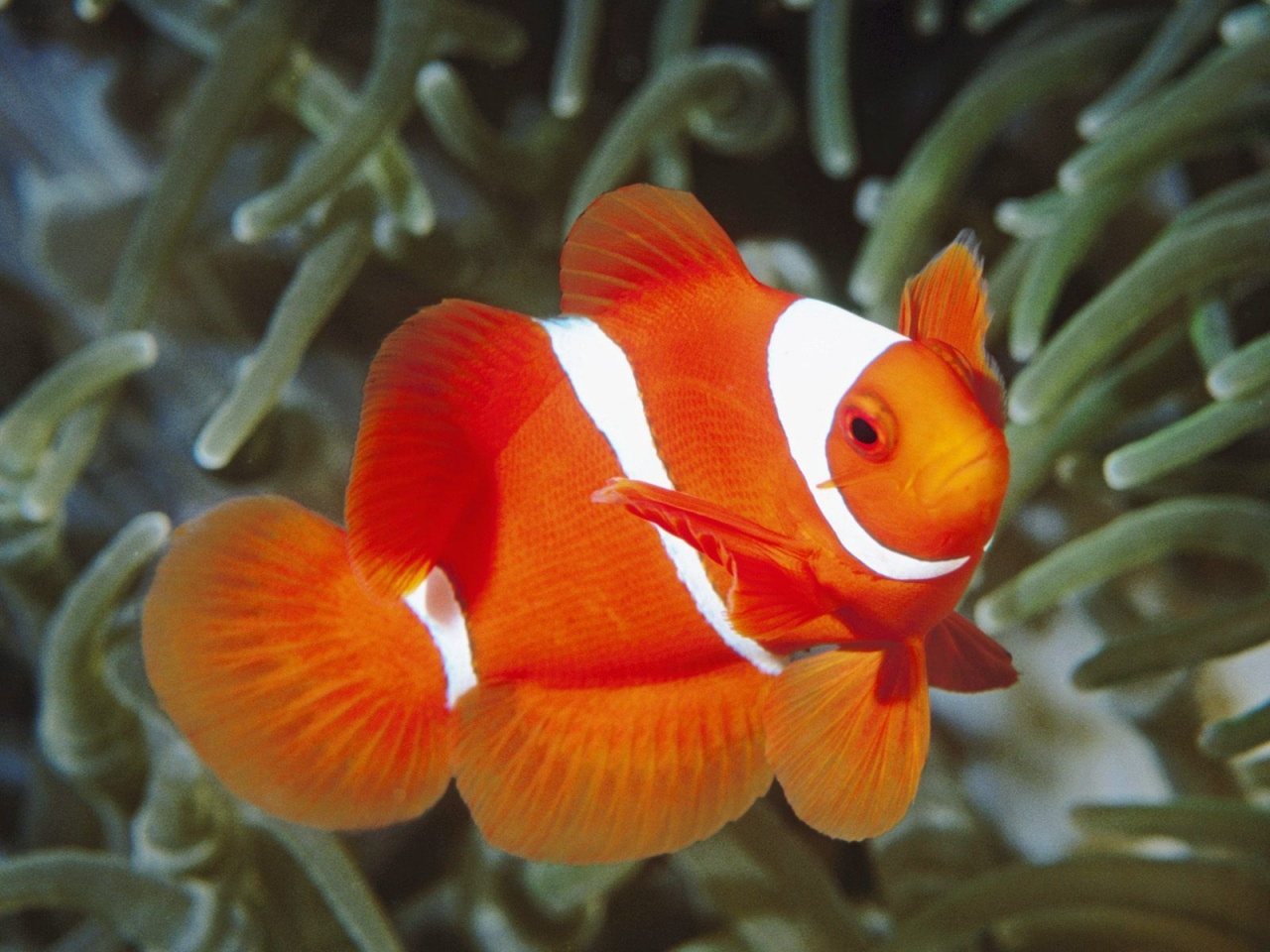 Pet Name Ideas for My Fish O2 Community |