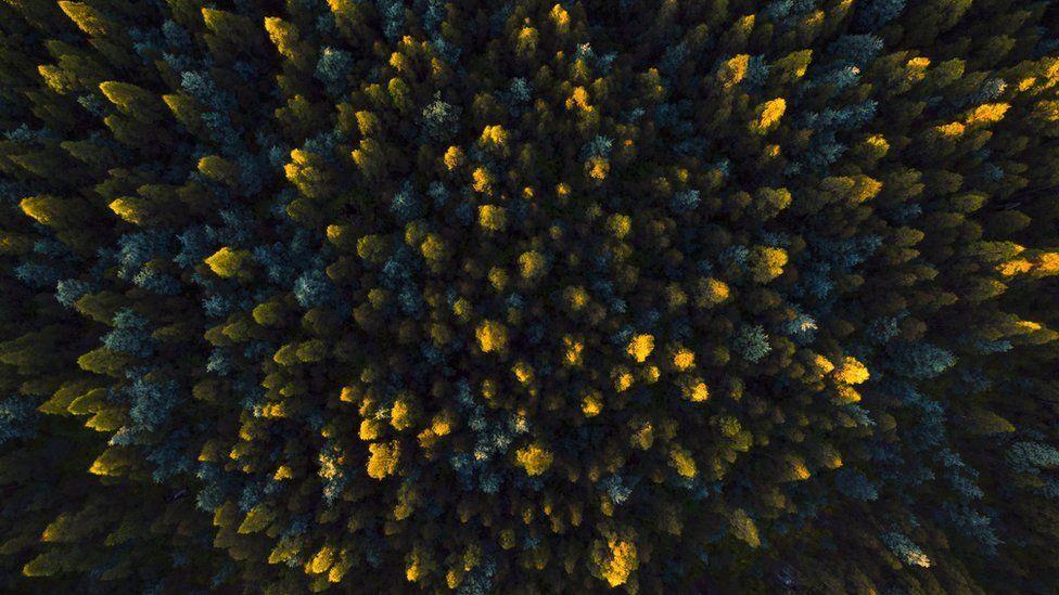 Oz trees above .jpg